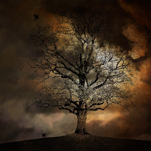 tree-697703_640